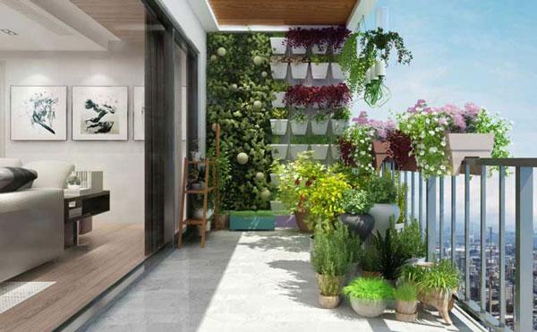 [Giải đáp chi tiết] Ban công chung cư nên trồng cây gì? 3